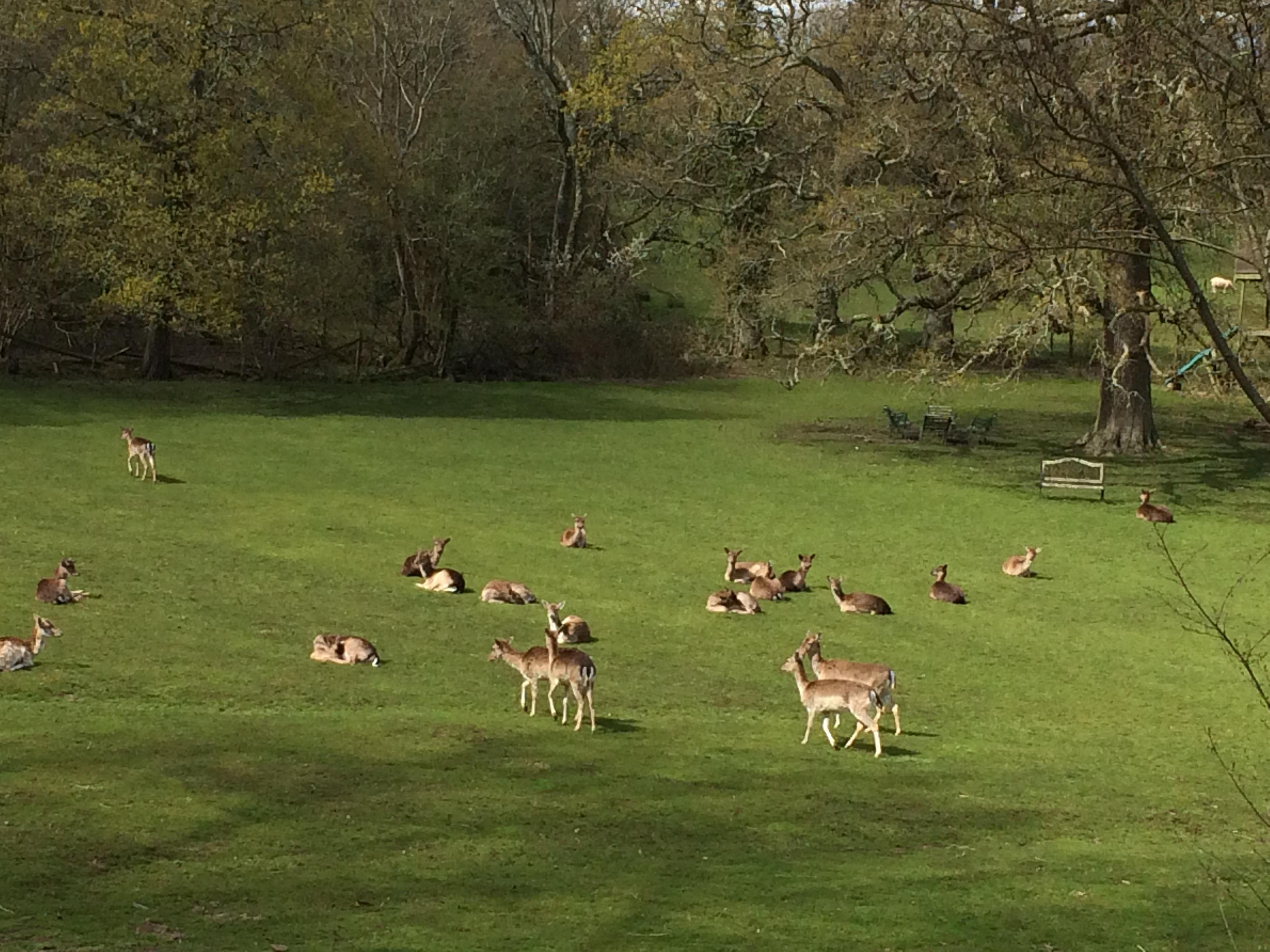 Deer2JPG